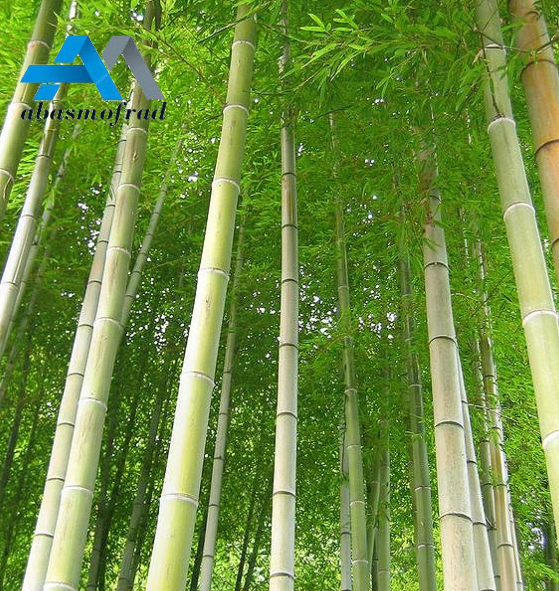 فروش عمده چوب بامبو